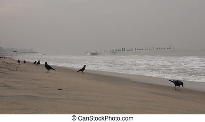 crows at sea beach, india