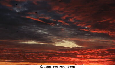 Crows flock on sunset twilight sky