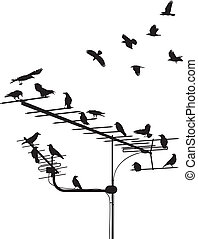 Crows on the antenna - black silhouettes of the crows on the...
