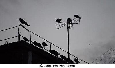 crows sitting on a wire on the roof.