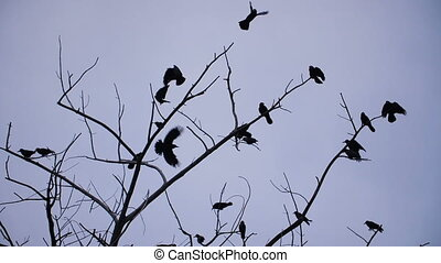 Crows taking off from tree - Flok of crows on a branch...