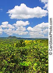 croydon, plantage, jamai