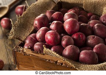 cru, organique, pommes terre rouges