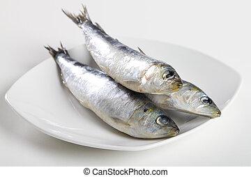 cru, sardine
