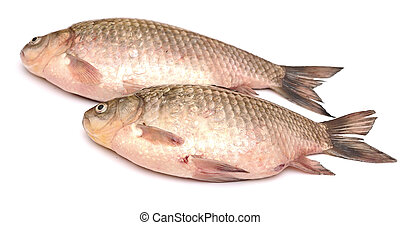 Crucian carp fish isolated on white background