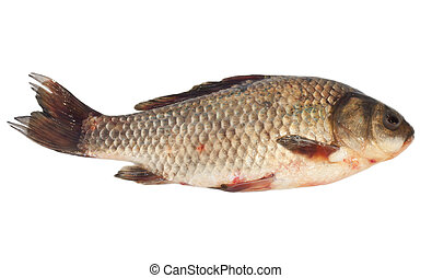 Crucian carp isolated on white background