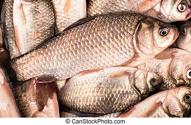 Crucian carp - Many small crucian carp caught on fishing...