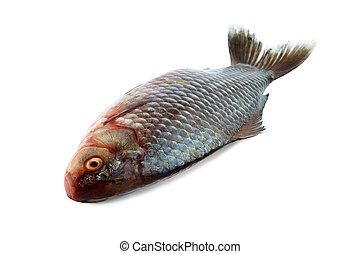 Crucian - Close-up of a fish isolated on white with clipping...