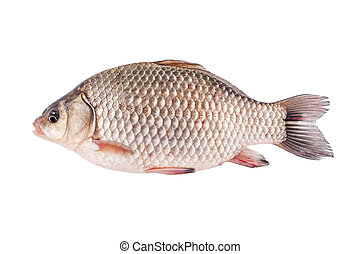 Crucian fish - isolated on a white background