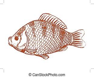 crucian freshwater fish