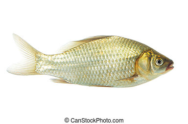 Crucian on white