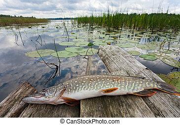 Crude, fresh fish (pike)
