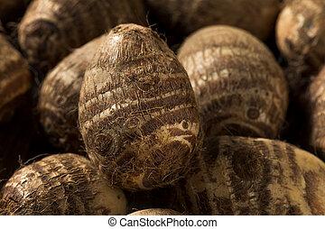 crudo, raíz, marrón, orgánico, taro