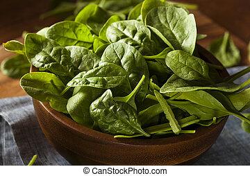 crudo, verde, orgánico, bebé, espinaca
