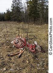 Cruel Nature - A baby deer is eaten by wild animals.
