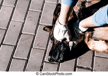cruelty to animals - cruelty to dog - strangling of german...