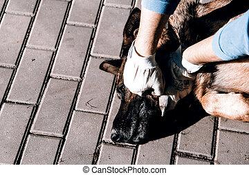 cruelty to animals - cruelty to dog - strangling of german...