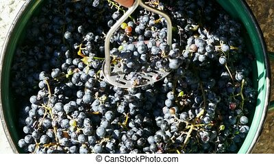 crush black grapes in a bucket