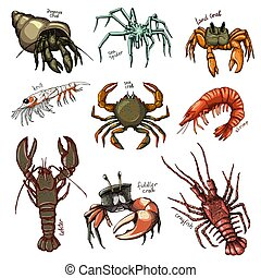 Crustacean vector crab prawns ocean lobster and crawfish or crayfish seafood illustration crustaceans set of sea animals shrimp characters isolated on white background