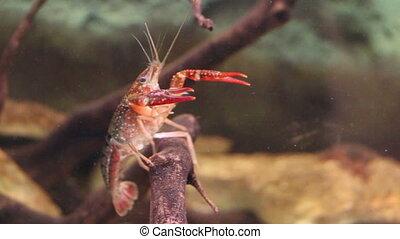 Crustaceans underwater
