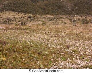 Crustose lichen growing on boulder - on paramo near Cotopaxi...