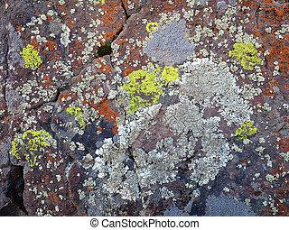 Crustose Lichen on a Desert Boulder