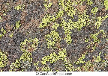 Crustose green lichen on Arizona rock