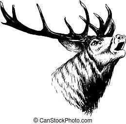 Crying Deep Art - hand drawn image of big white tail buck...