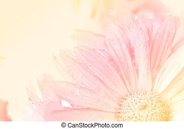 crysantheme, Stil, blume, weich, hintergrund