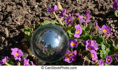 crystal ball and spring flowers in the wind