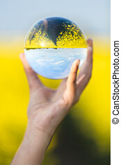 Crystal Ball in a Field of Yellow Flowers