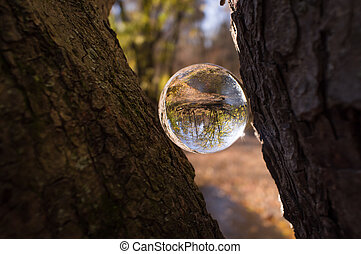 Crystal Ball Nature - Magic crystal ball between tree...