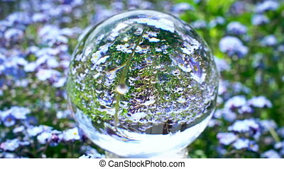 crystal ball reflection with beutiful blue flowers field on the background, nature world texture concept
