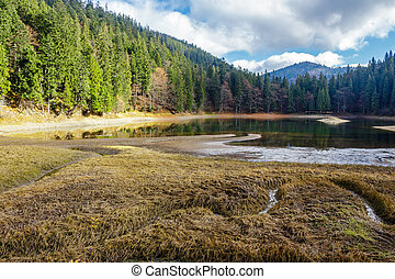 crystal clear lake near the pine forest in mountains - view...
