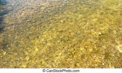 Crystal clear river. Pebbles on the bottom of a stream.