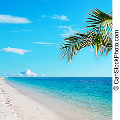 crystal clear water and palm tree