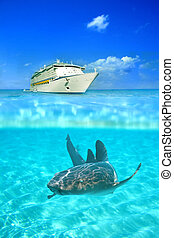 Crystal clear waters - Nurse shark in the crystal clear...