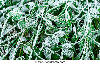 Crystals of frost on the grass, background, winter