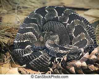 csörgőkígyó, faanyag
