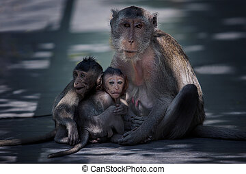 család, majom, vadon