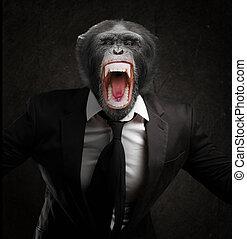 csalódott, majom, alatt, üzlet alkalmaz