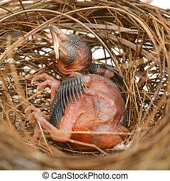 csecsemő, búvóhely, madár