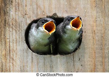 csecsemő madár, alatt, egy, madár épület