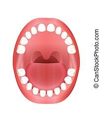 csecsemő, száj, gyerekek, teething, fog