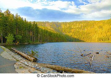 cseh, nemzeti park, tó, sumava, republic., fekete