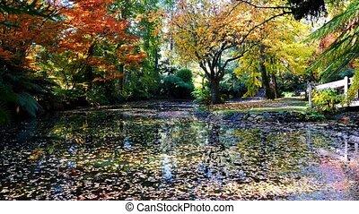 csendes, ősz, tó