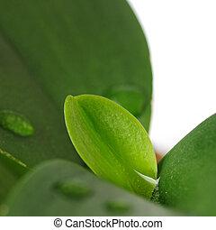 cseppecskék, levél növényen, eső
