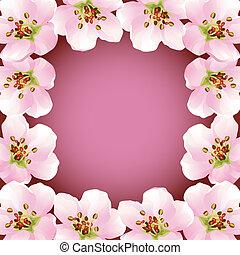 cseresznye, keret, virágzás, -, japán, fa, sakura