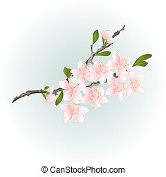 cseresznye, menstruáció, sakura, elágazik, vector.eps