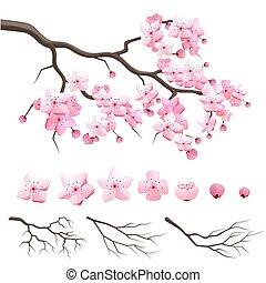 cseresznye, sakura, elágazik, virágzó, japán, menstruáció